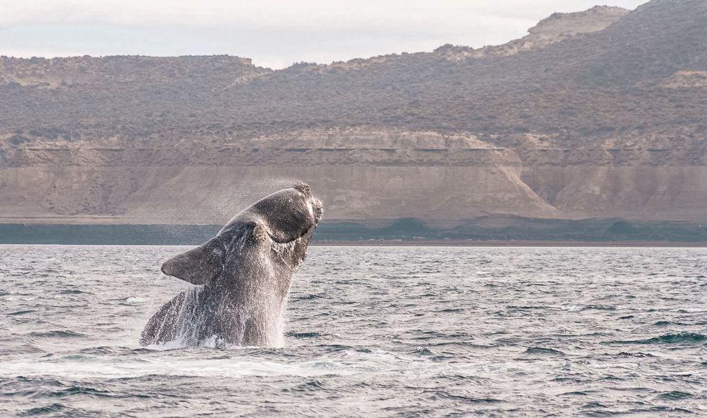 Qué ver en Puerto Madryn, las ballenas